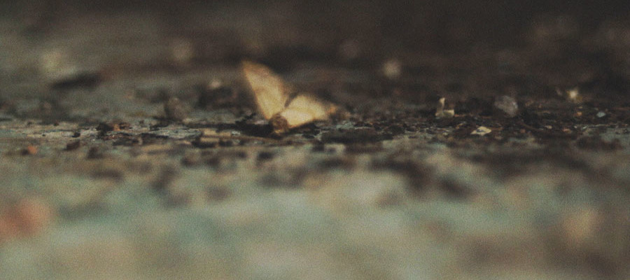 el-tornillo-de-klaus-ape-man-s-tv-la-guarimba-international-film-festival-intro-2016-hombre-mono-depre-moth