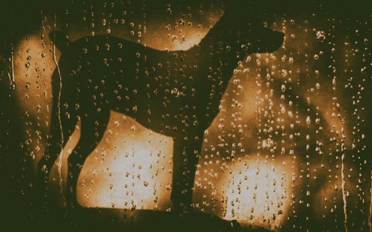 Heart of a Dog, Laurie Anderson, 2015, Alicia Victoria Palacios Thomas, Beat generation, Beatniks, David Foster Wallace, Heart of a dog, Jorge Capelloni, Laurie Anderson, Lou Reed, Ludwig Wittgenstein, Soren Kierkegaard, Heart of a Dog Laurie Anderson, revista de cine, critica de cine, criticas de cine, películas, películas 2016, criticas de películas, recomendaciones cine, que ver, cine culto, revista de cine imagenes, revista de cine y series, revista de cine independiente, revistas de cine en españa, blog de cine, revista de cine online