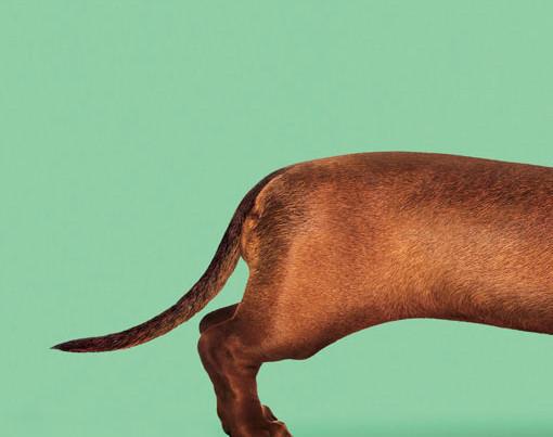 Wiener Dog pelicula, Wiener-dog film, Todd Solondz, El tornillo de Klaus, Revista de cine